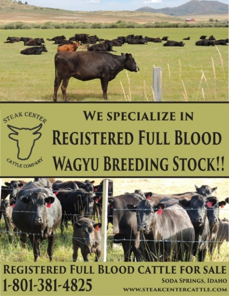 Registered Full Blood Wagyu Breeding Stock