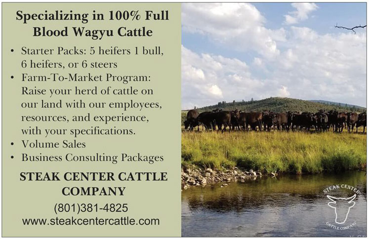 Steak Center Cattle Company Promotional Flyer